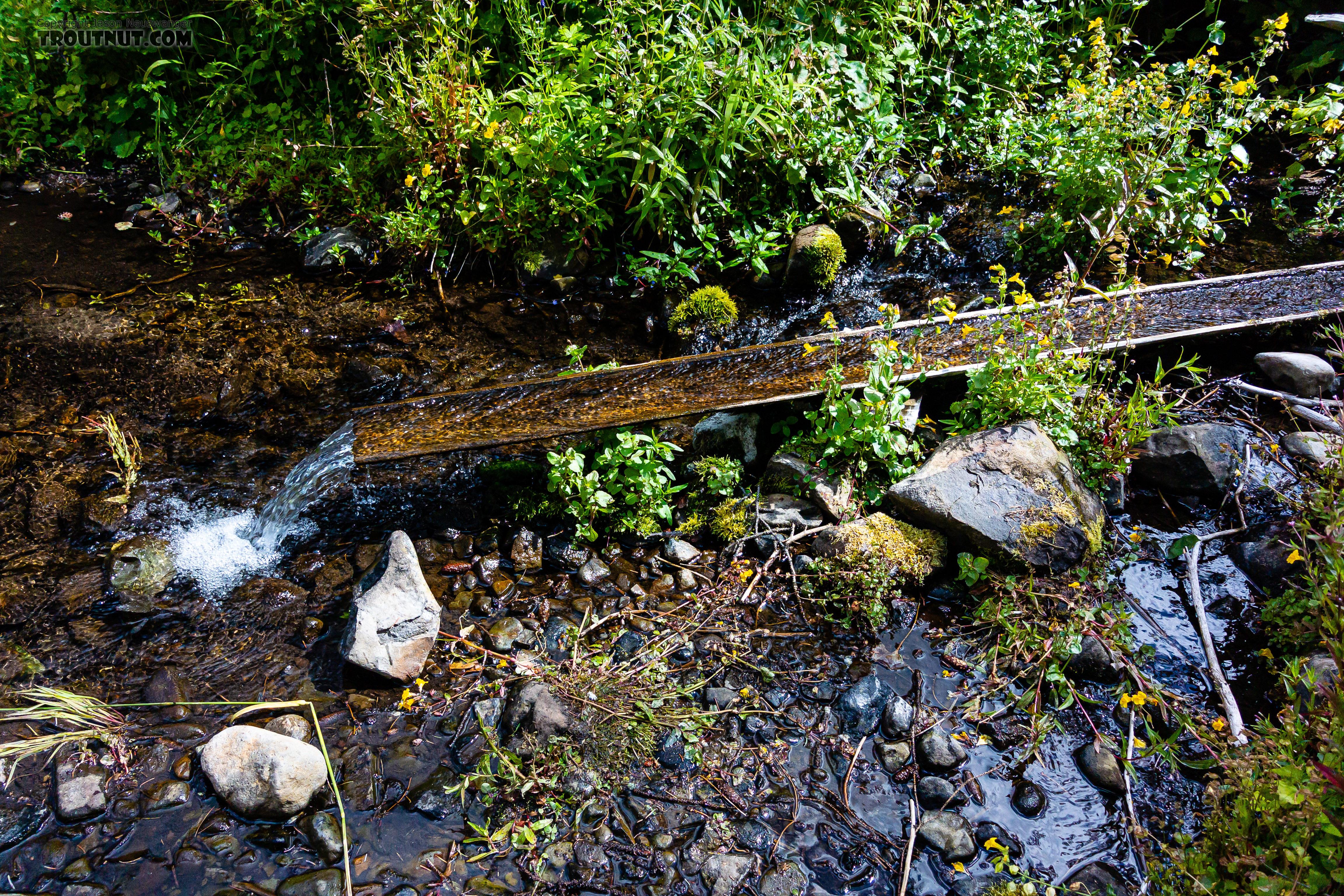 From Mystery Creek # 250 in Washington.