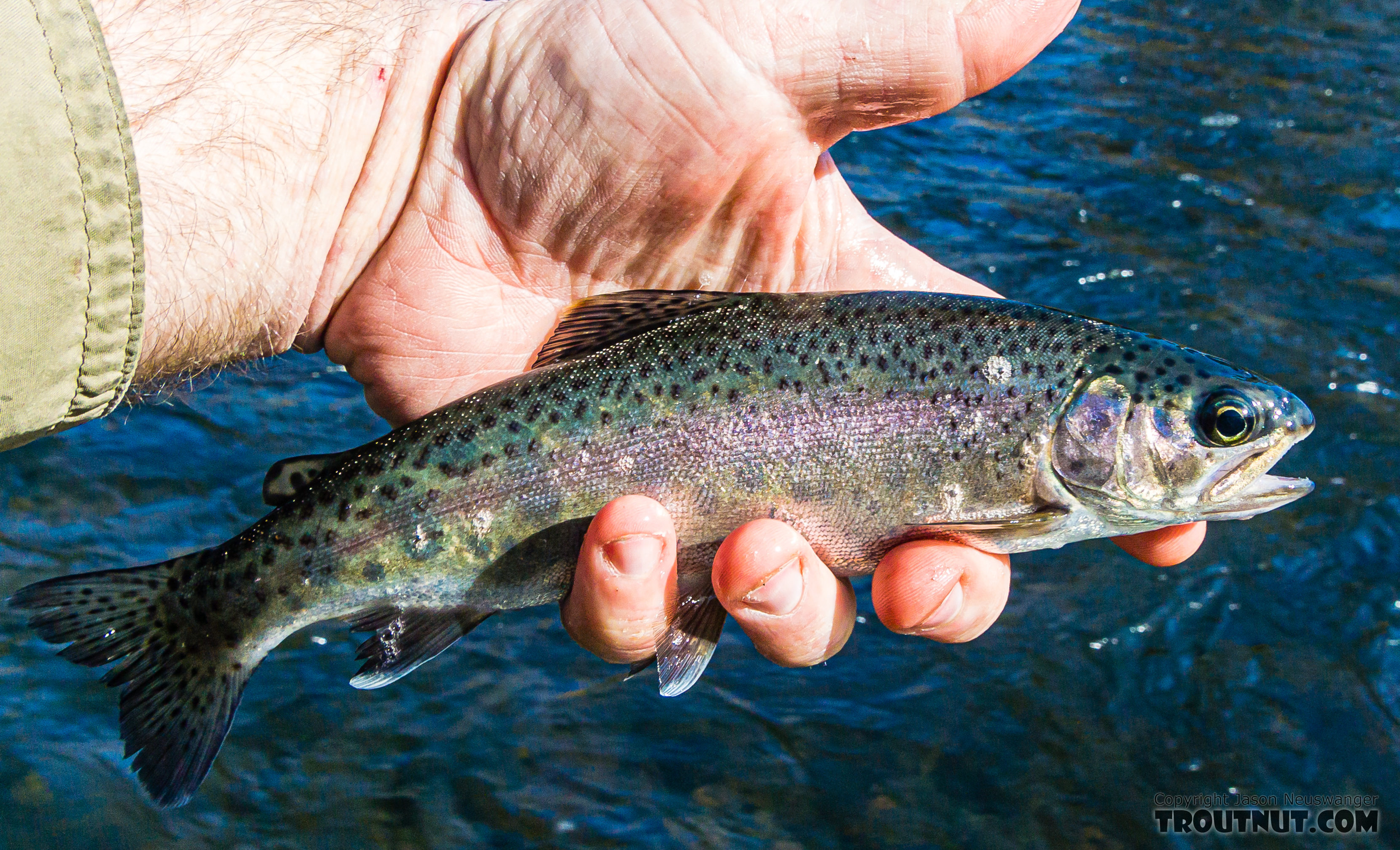A typical rainbow for the day. From the Yakima River in Washington.