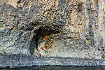 Interesting muddy nests from cliff swallows here. From the Yakima River in Washington.
