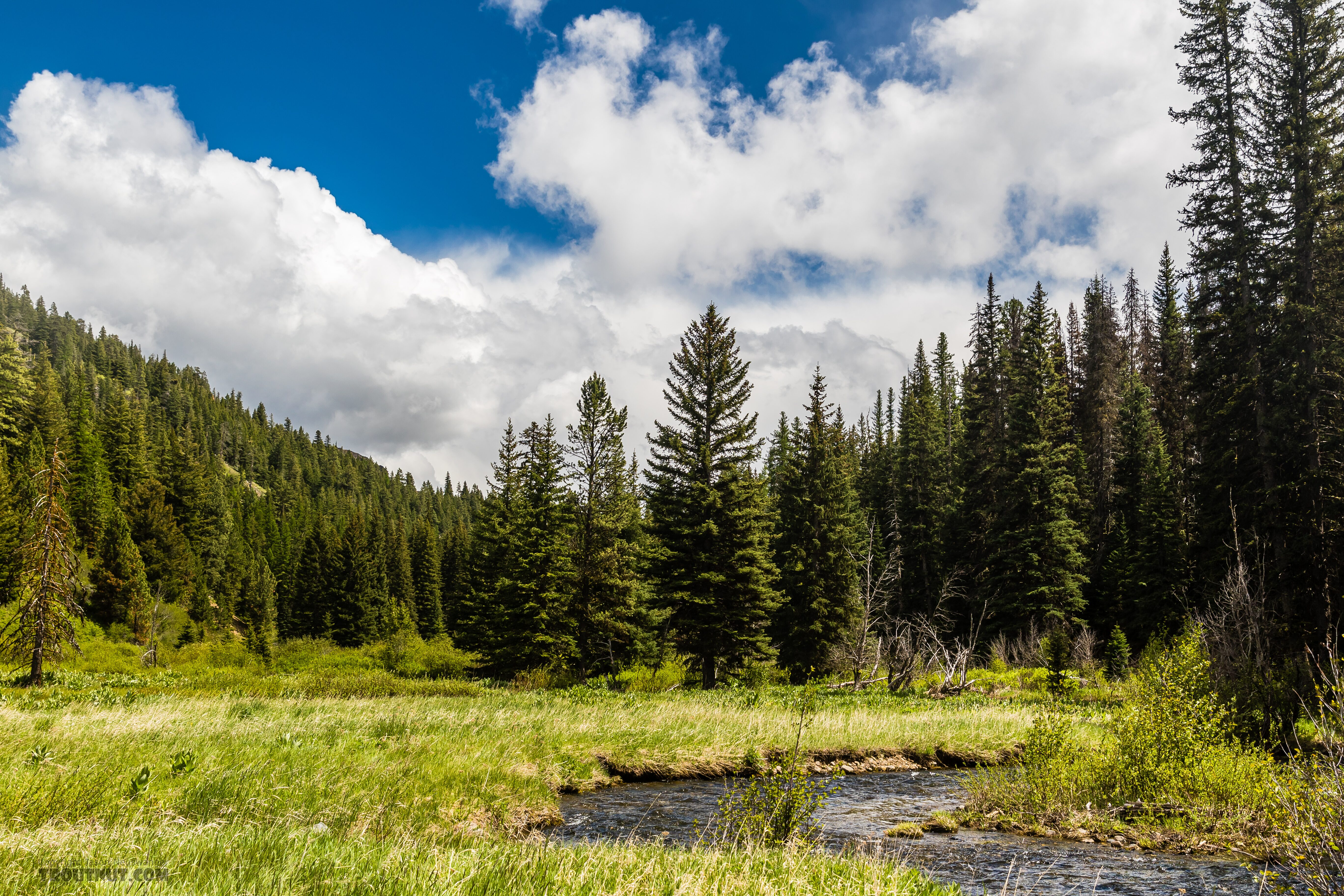 From the South Fork Manastash Creek in Washington.