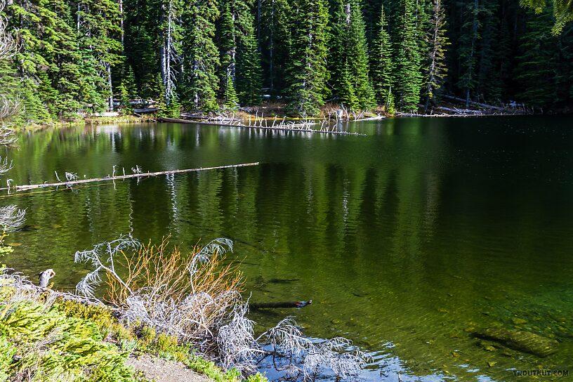 From Taneum Lake in Washington.