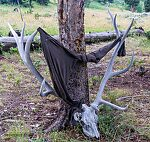 Somebody placed an unusual clothes-drying rack at one of my campsites. From Slough Creek in Wyoming.