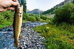 From Star Hope Creek in Idaho.