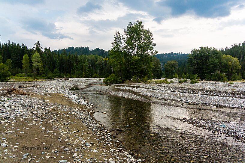 From Pilgrim Creek in Wyoming.