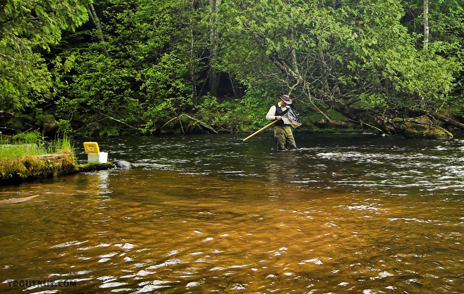 Here I'm looking through the sampling net for interesting nymphs, some of which ended up on this site. From the Bois Brule River in Wisconsin.