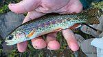 Hobbs Lake rainbow From Hobbs Lake in Wyoming.