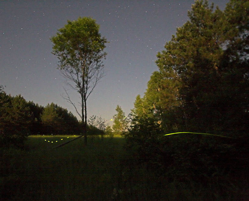 Fireflies streak in front of a moonlight meadow after midnight. From the Namekagon River in Wisconsin.