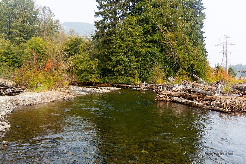 From the Yakima River in Washington.