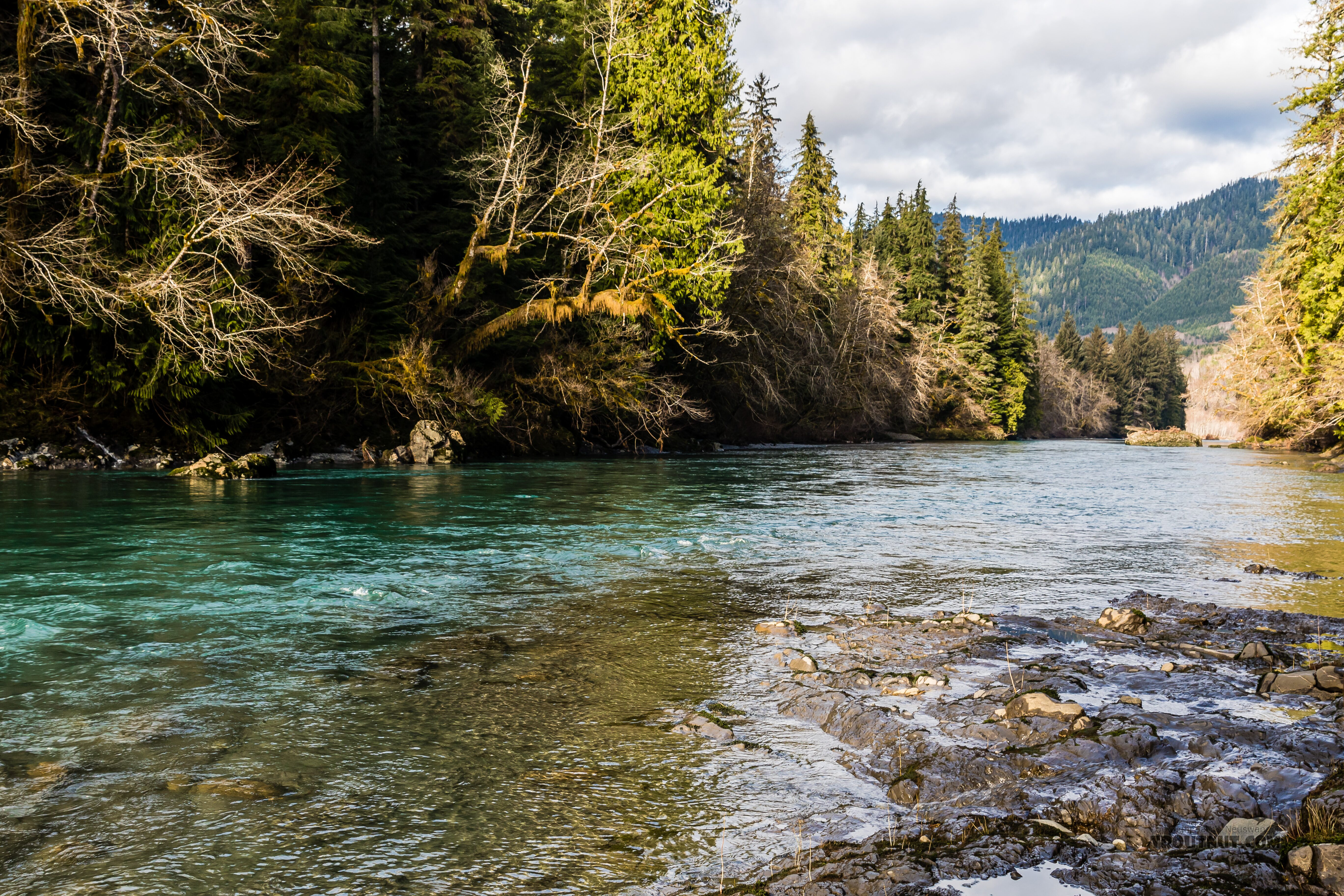 From the Hoh River in Washington.
