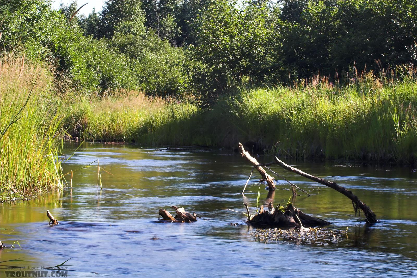 From Eighteenmile Creek in Wisconsin.