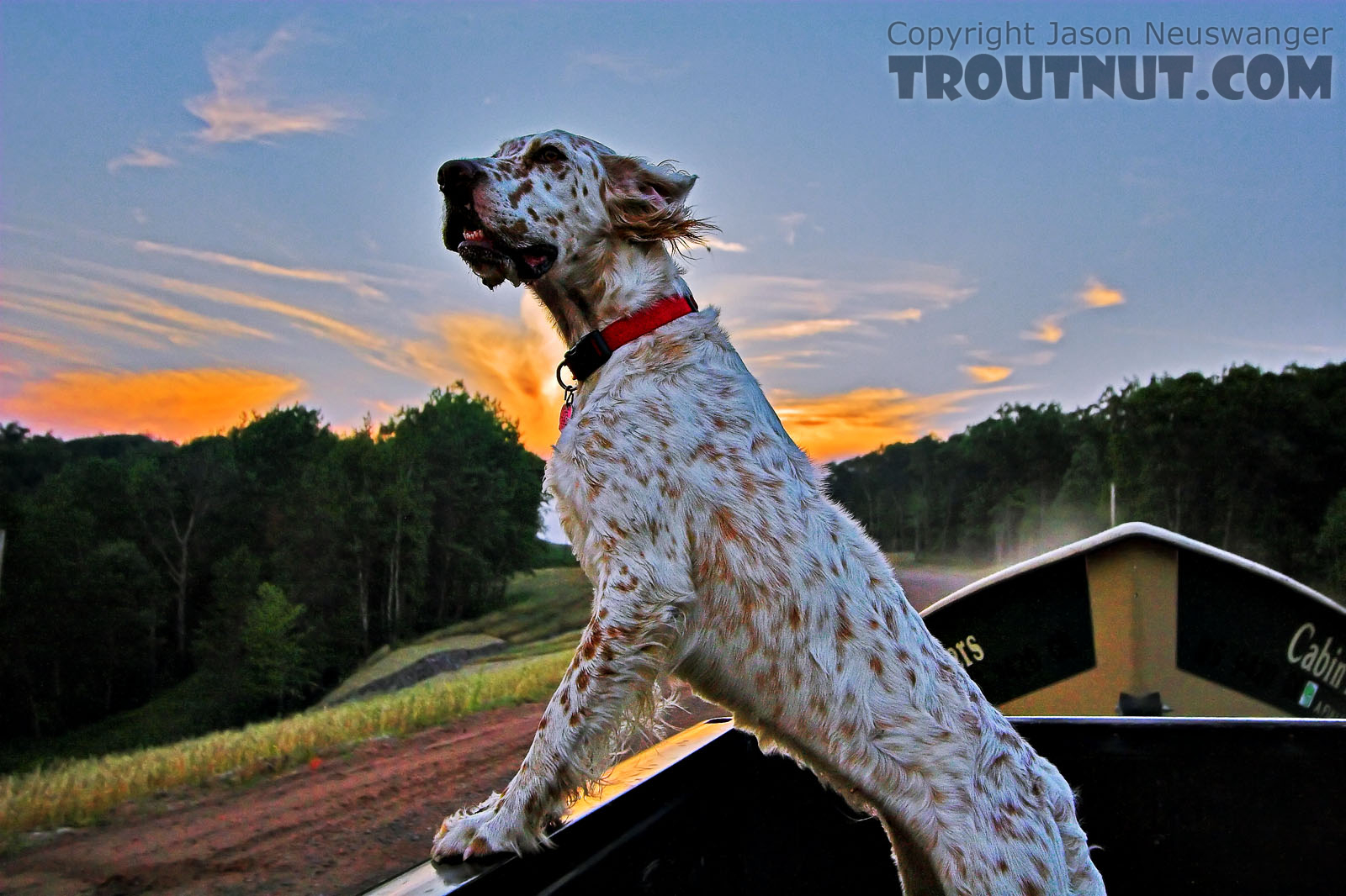 This is my friend Brad's English Setter named Penny, framed against a sunset during the short drive between landings after a float trip. From the Namekagon River in Wisconsin.