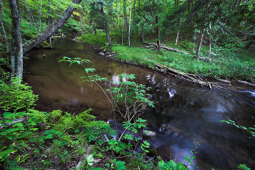 This is one of my favorite small-stream pools. From the Long Lake Branch of the White River in Wisconsin.