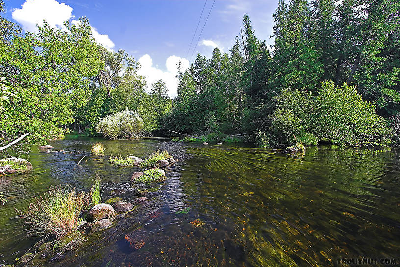 A small, old rock wing dam has created an excellent riffle and pool in this classic trout stream. From the Bois Brule River in Wisconsin.