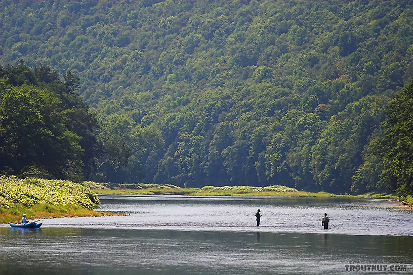 Several anglers fish the tail of a famous pool, loomed over by a Catskill mountain. From the Delaware River, Junction Pool in New York.