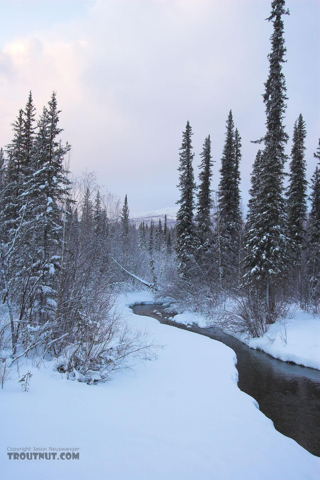 This is a small, photogenic tributary of the main river I was photographing in Alaska. From the Chena River tributary in Alaska.