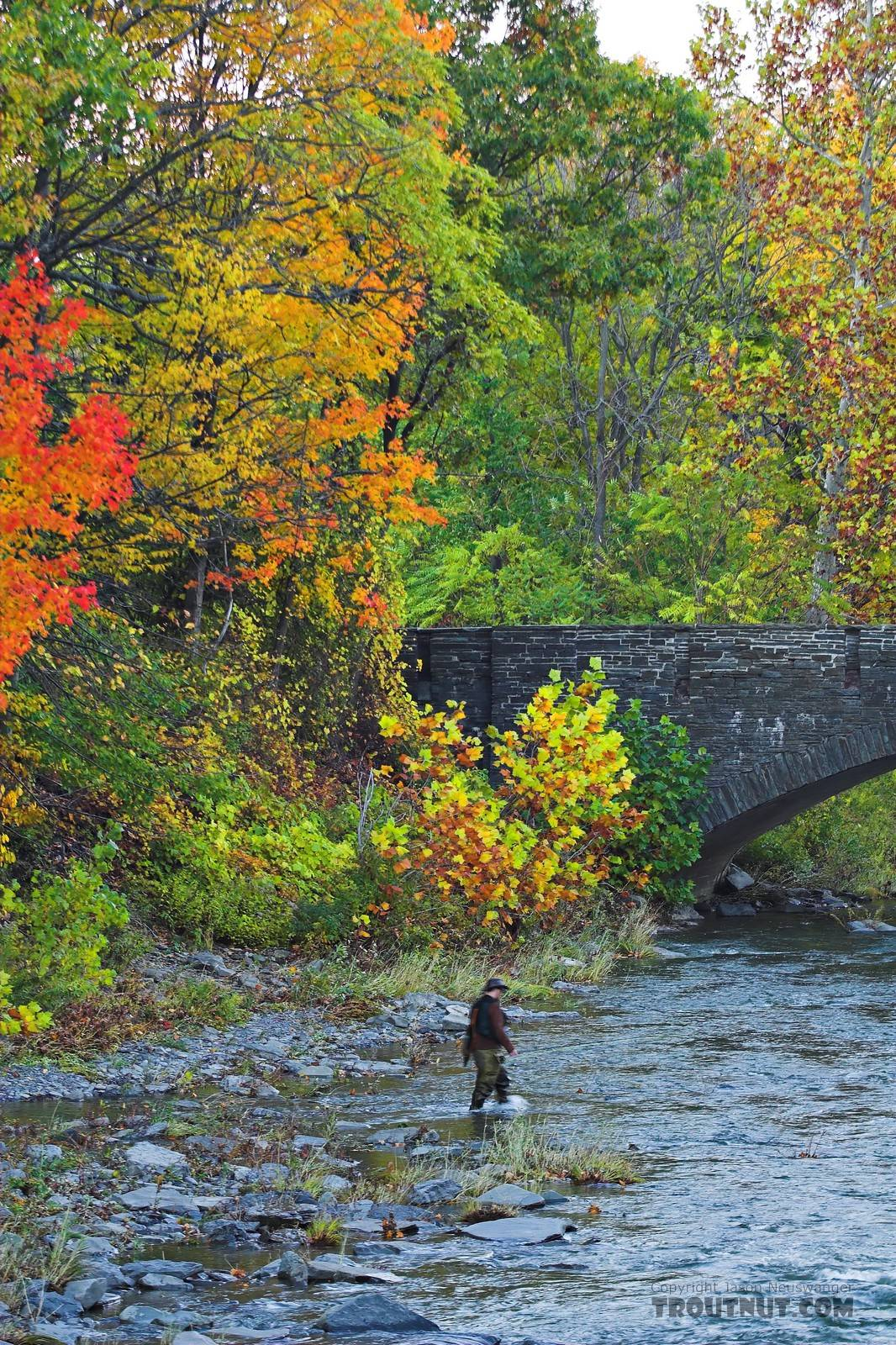 I cross a small river after an unsuccessful attempt to find some fall-run landlocked salmon.  This picture was taken shortly after another very nice wider picture of the same spot.  Photo by Elena Vayndorf. From Toughannock Creek in New York.