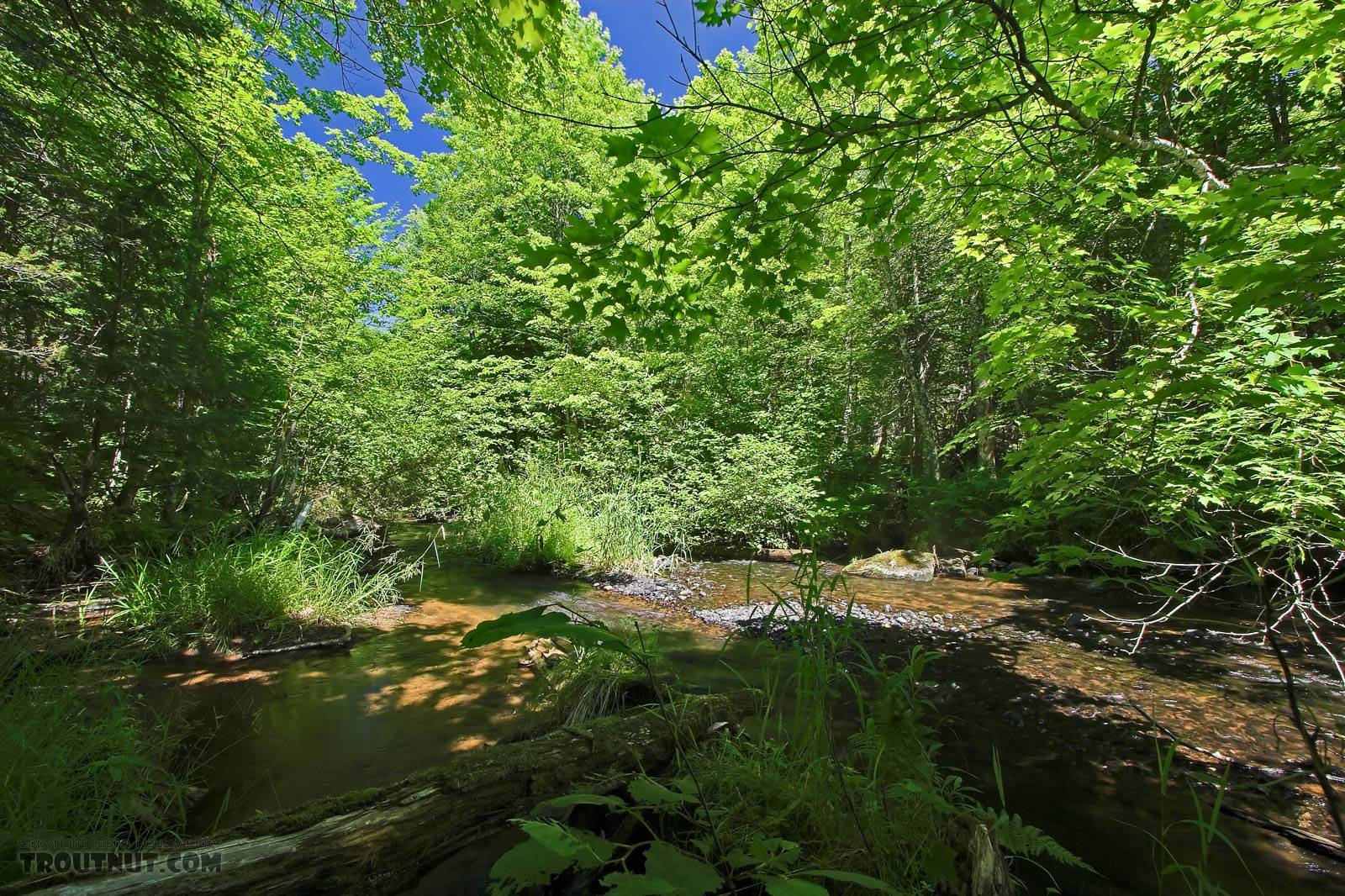 From Eighteenmile Creek in Wisconsin.