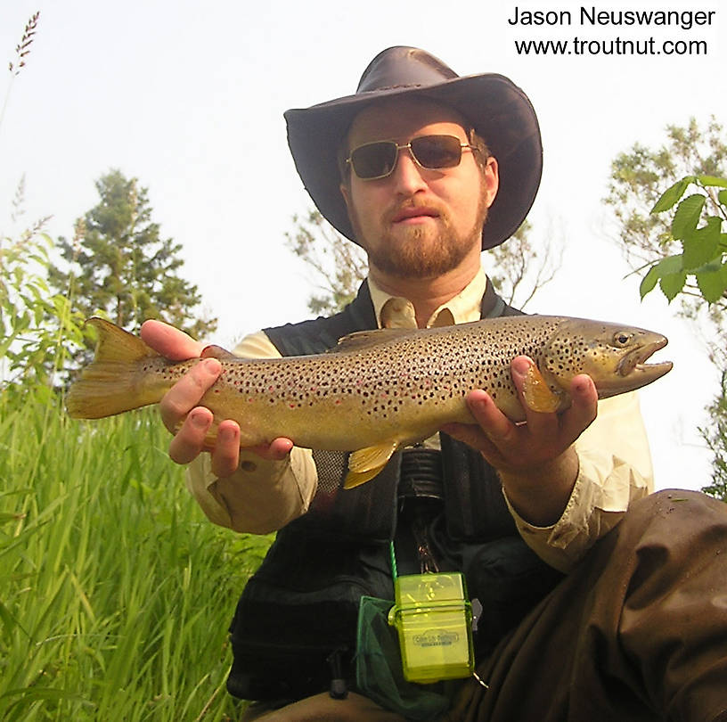 I'm holding a beautiful 20 inch brown trout from Isonychia time. From the Namekagon River in Wisconsin.