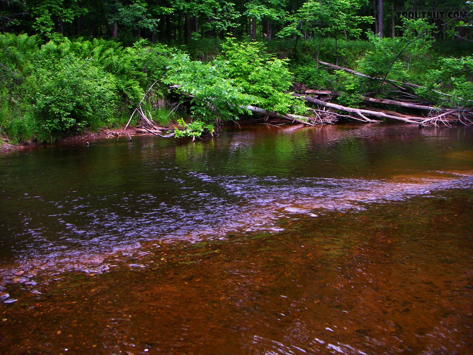 This is one of my favorite small-stream pools because it's so fishable.  The little stream holds brookies, browns, and rainbows in equal number, never spectacular, but there's always a little something. From the Marengo River above Four Corners Store Road in Wisconsin.