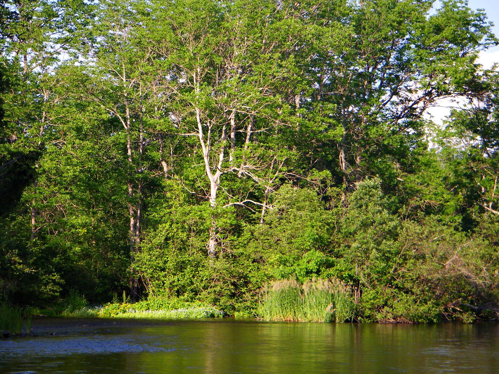 From the Namekagon River near Seeley in Wisconsin.