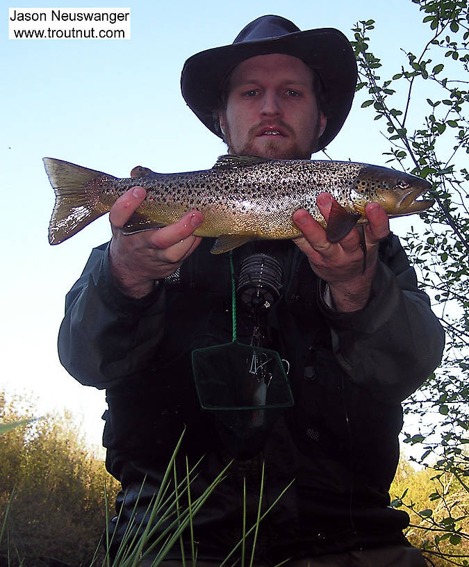 Here I am soaking wet holding up a hard-earned 17 inch brown trout. An hour or so before I caught her, I attempted a treacherous crossing over loose gravel, and the river was running high.  I found myself treadmilling on my tiptoes to maintain my footing as the gravel slipped beneath me, and I was swept off downstream and swam to shore with a few gallons of 55 degree water in my waders. Being me, I kept fishing. From the Bois Brule River in Wisconsin.