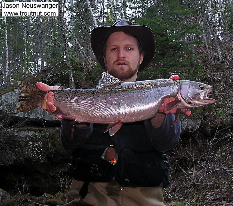 "This 26.5"" hen steelhead was my biggest trout ever at the time. From the Sioux River in Wisconsin."