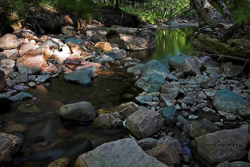 From Mystery Creek # 4 in Wisconsin.