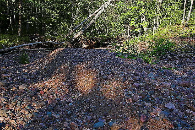 This huge pile of stones was deposited alongside a very small brook trout stream in a huge flood about 9 months before this photo was taken. From Spring Creek in Wisconsin.