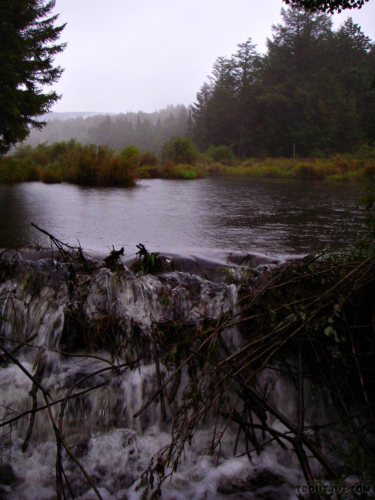 This beaver pond blocks a tributary in the headwaters if Willowemoc Creek in the Catskills.  It supposedly holds brook trout, but I didn't find them in my hasty effort as light waned on this rainy September evening. From Fir Brook in New York.