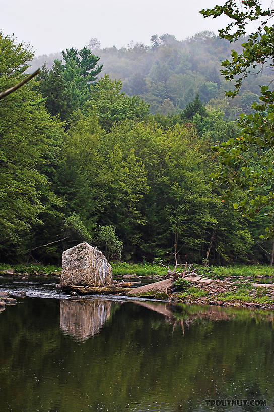 From the Neversink River in New York.