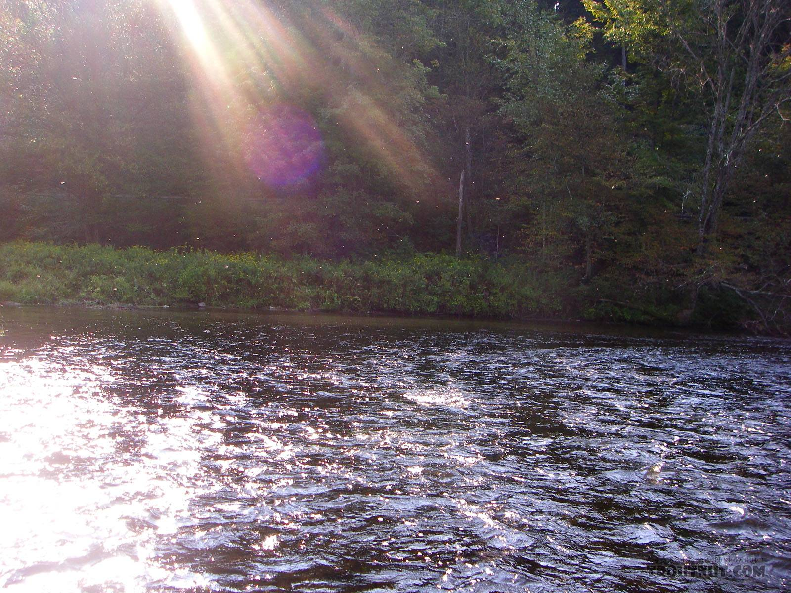 Twinkling Tricos in the air. From the Neversink River in New York.