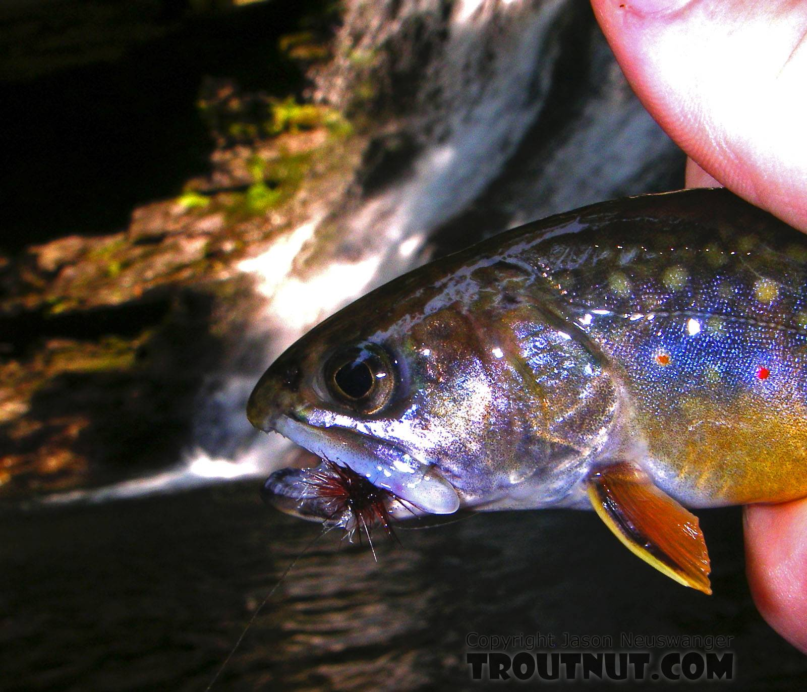 What could be better than catching wild brookies below a waterfall? From Mystery Creek # 89 in New York.