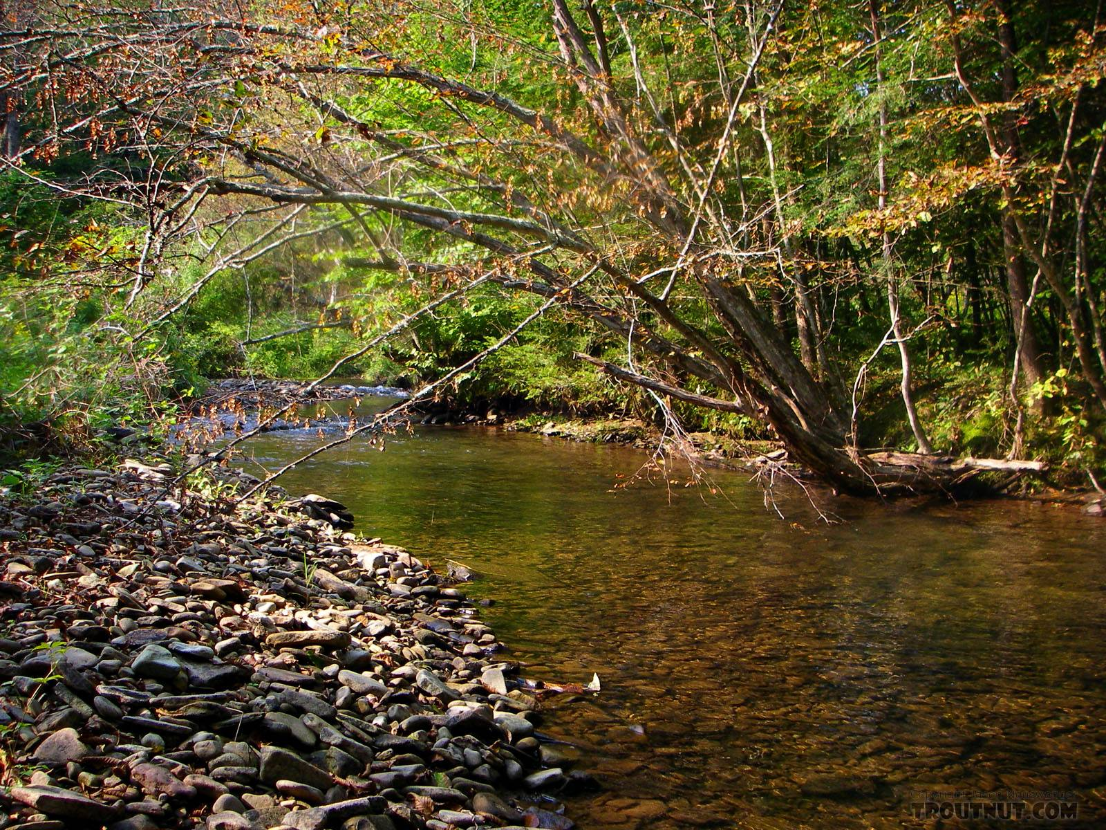 From the East Branch of Trout Brook in New York.