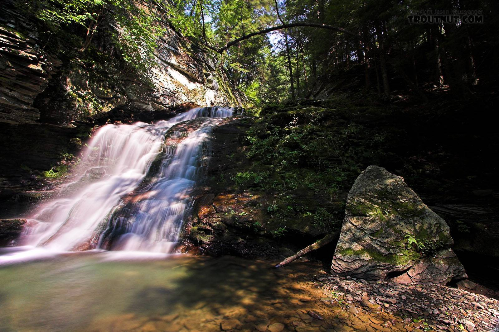 I caught several wild and colorful 8-9 inch brook trout in the clear little pool below this waterfall. From Mystery Creek # 89 in New York.