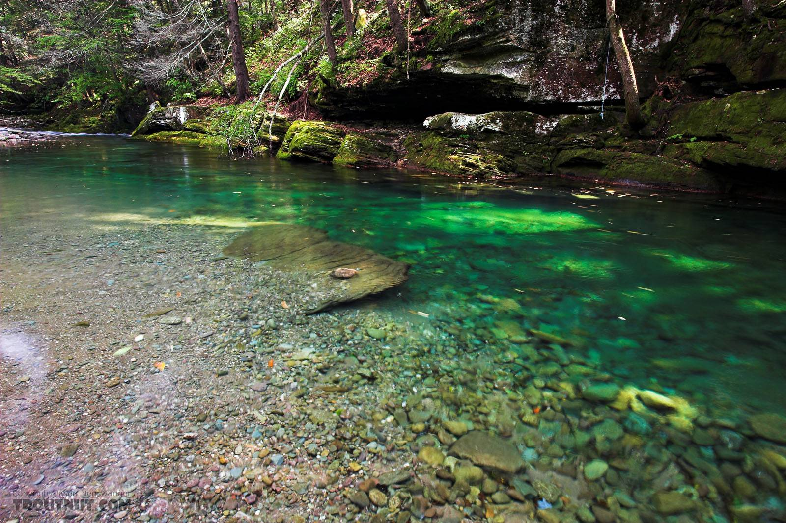 This is a very deep pool in a very clear stream.  It's well-known for its brookies, but I neither saw nor caught any in this inviting pool.  I drove a few miles upstream and ran into the expected number of eager little fish. From Rondout Creek in New York.