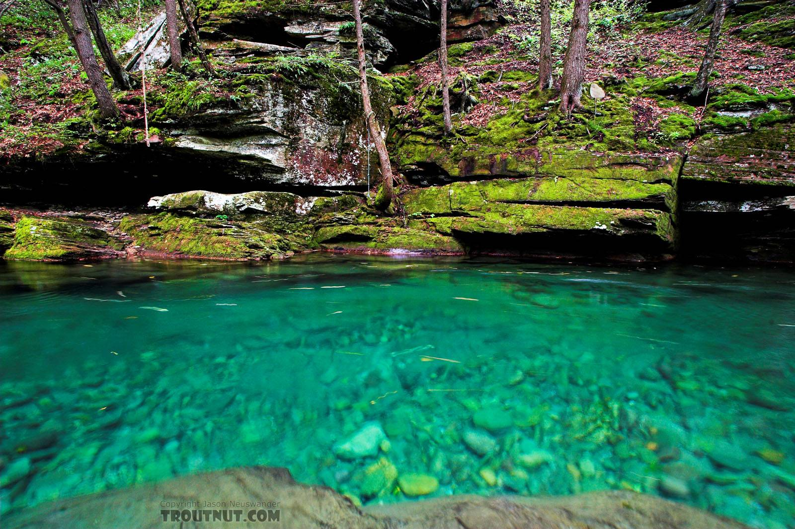 This small stream's so clear it looks like a swimming pool in this really deep spot. From Rondout Creek in New York.