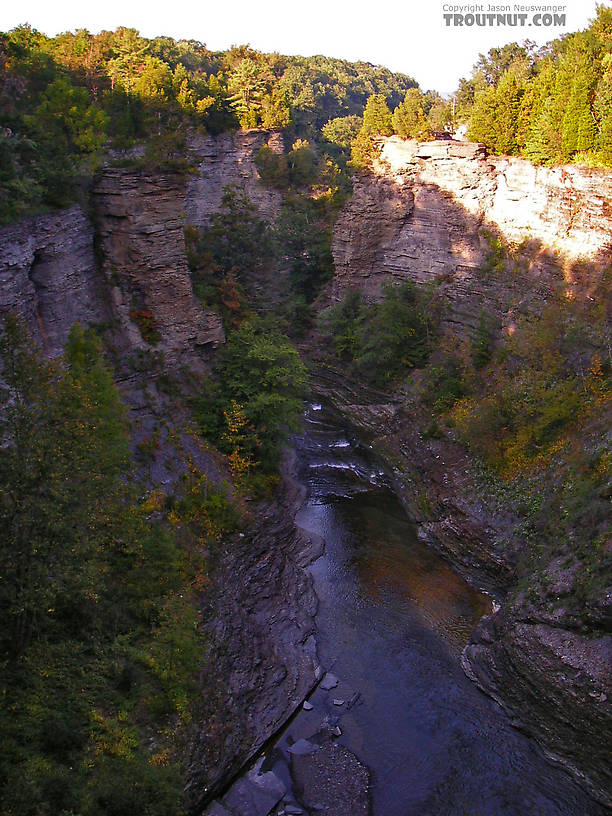 This gorge reportedly holds trout, and I would love to fish for them, although the stream's marginal thermal temperature would likely lead to disappointment.  It's hard to find out because there doesn't seem to be a way to get down there without professional rock-climbing equipment or a helicopter... From Toughannock Creek in New York.