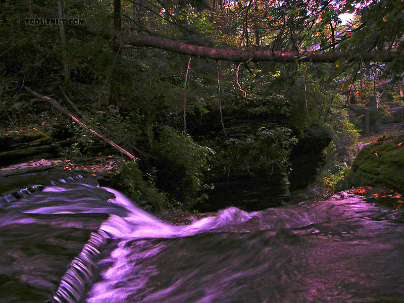 I took this picture in very low light and enhanced it.  This waterfall is kind of a strange meeting of two worlds: below the falls, there is a parking lot and an old millhouse at a very popular state park.  Above the little falls the park is wild and there's little trace of people. From Mystery Creek # 62 in New York.