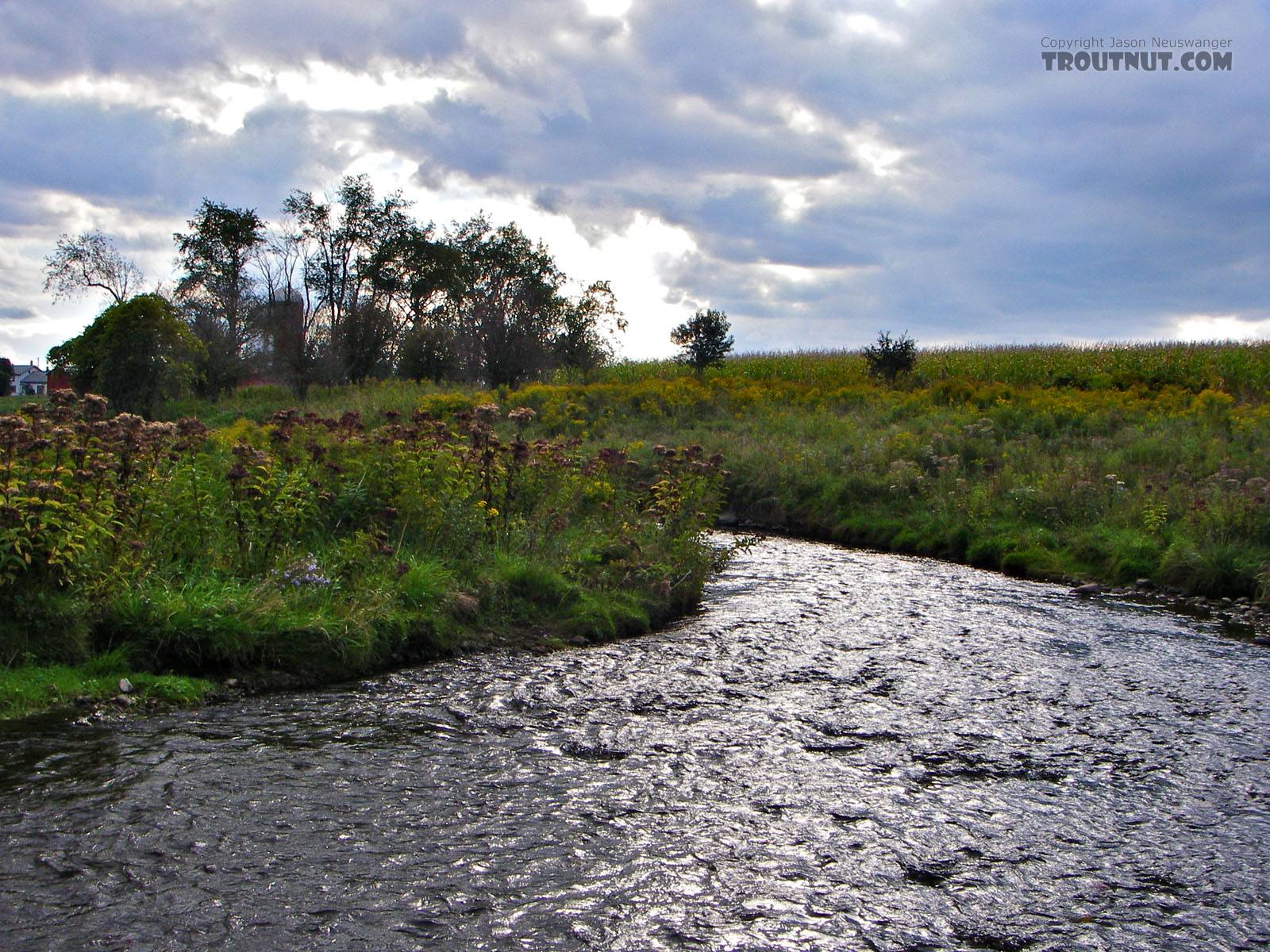 From Fall Creek in New York.