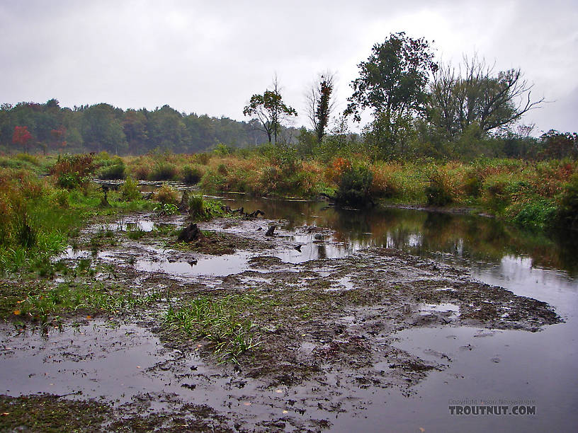 This seems to be a recently drained beaver pond in a swampy stretch of a trout stream. From Fall Creek in New York.