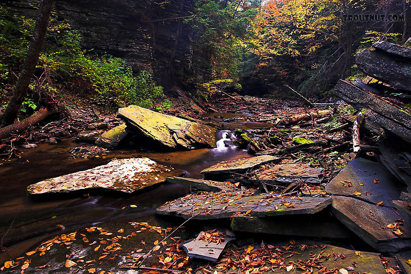 From Sixmile Creek in New York.