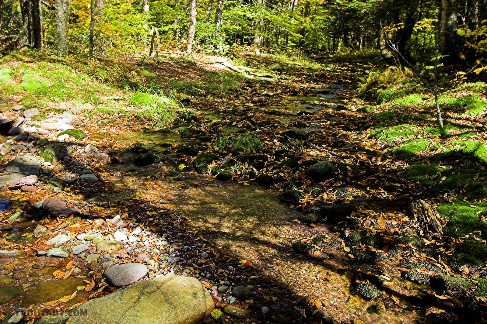 I like this little moss-bottomed trickle of a tributary. From the Mystery Creek # 23 in New York.