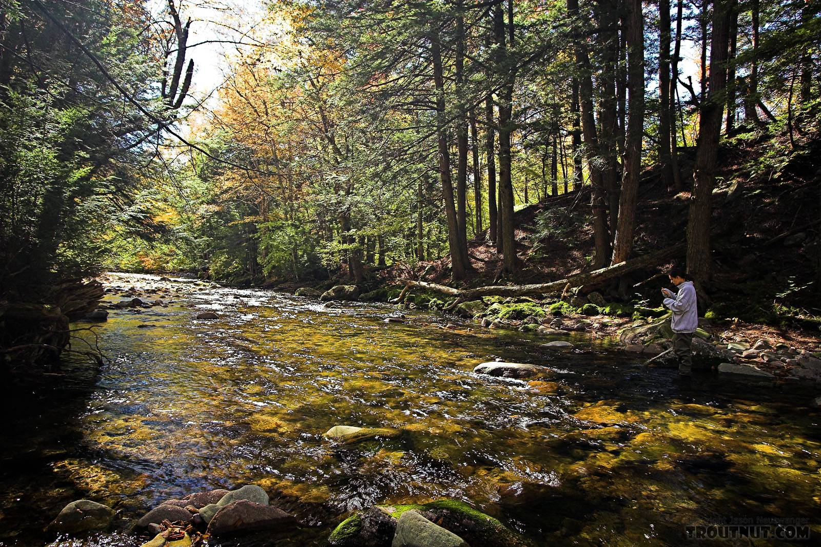 Lena fishes a brookie hole. From the Mystery Creek # 23 in New York.