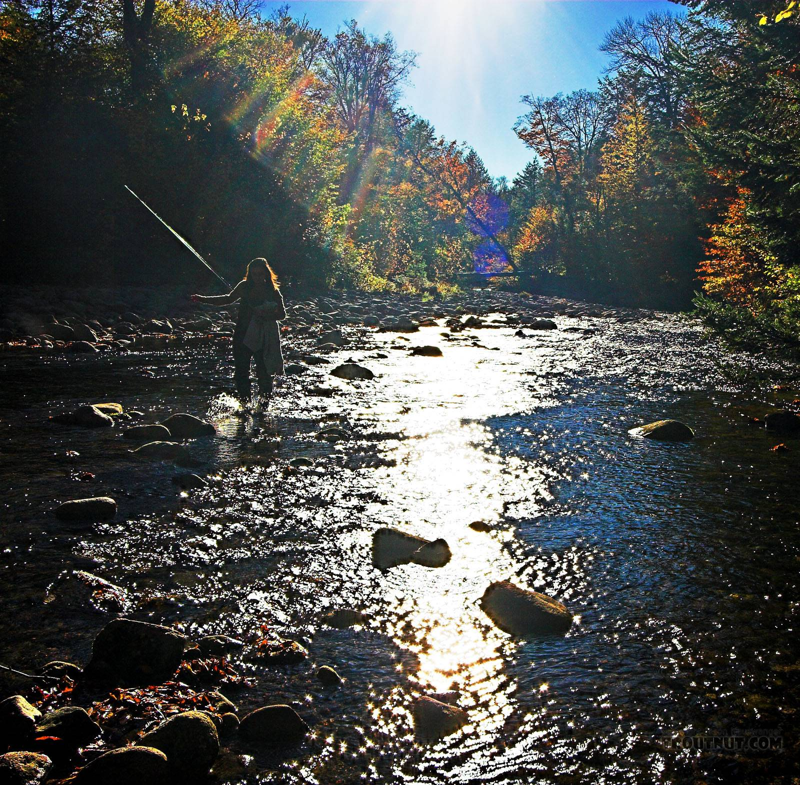 Lena wading across the riffle to catch up with me. From the Mystery Creek # 23 in New York.
