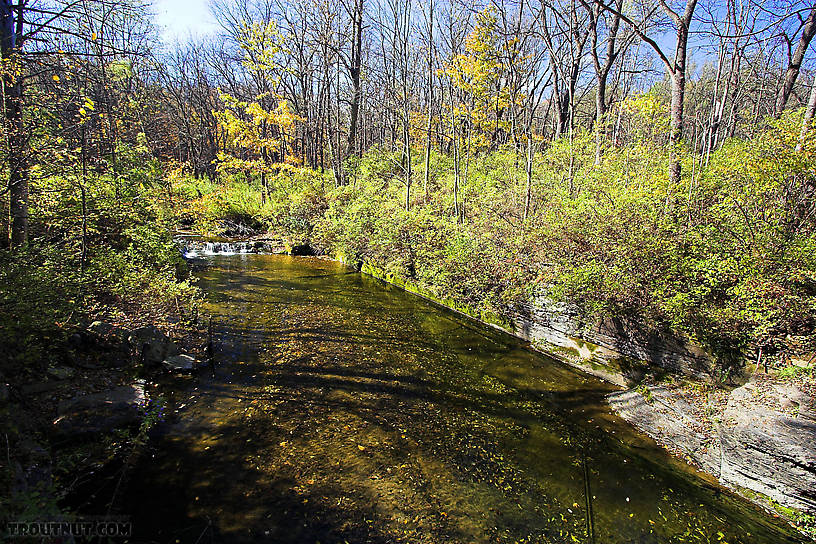 Many trout live in this pool, but they're very difficult to approach.  The stream is very small and the pool unusually large, so the current is very slow.  The trout have all the time in the world to inspect the fly, and they spook extremely easily. From Mystery Creek # 62 in New York.