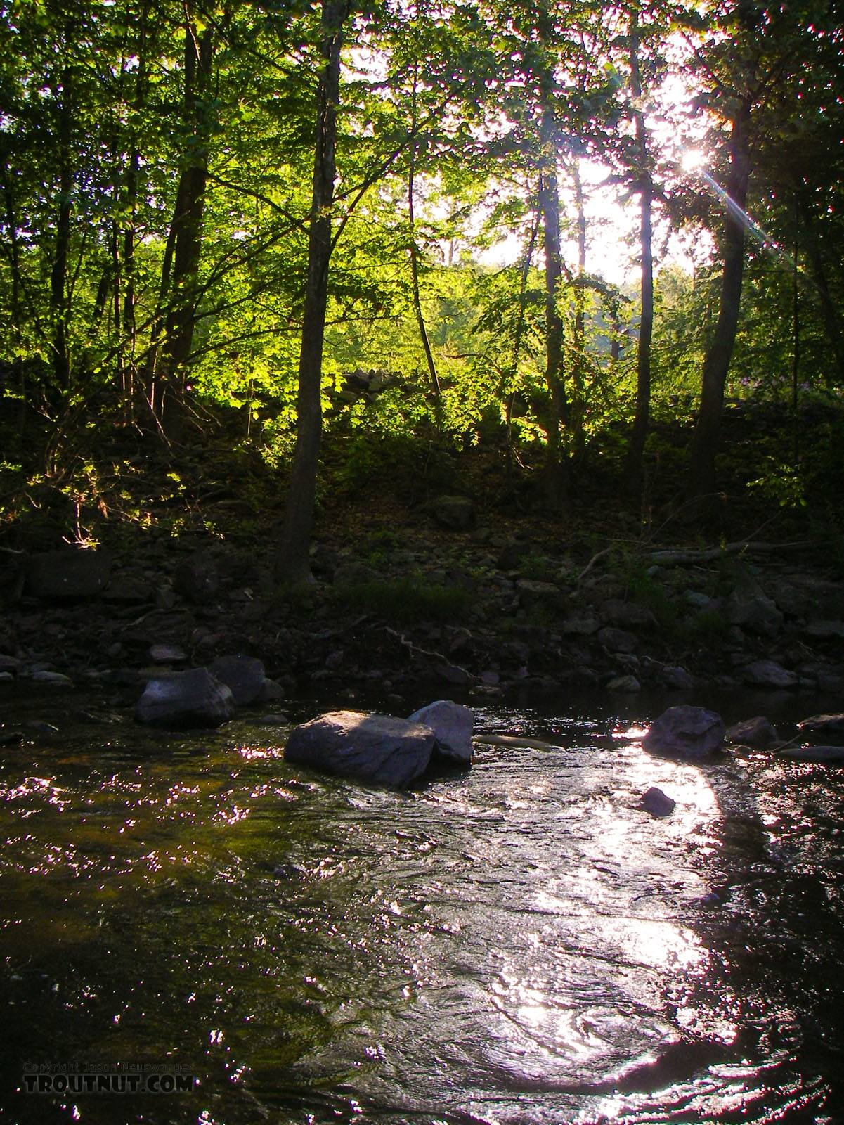 Early morning sunshine beats through the trees, heating the water up for a Drunella hatch. From Brodhead Creek in Pennsylvania.