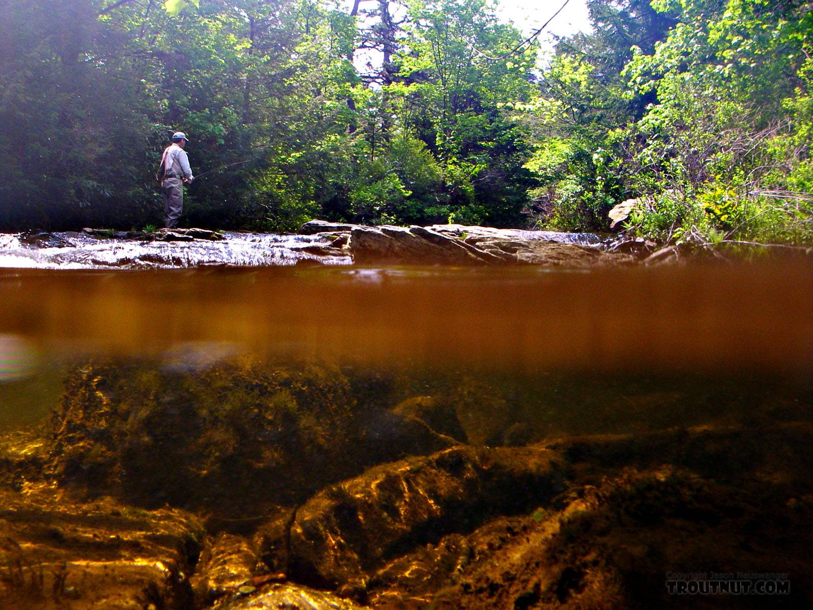 This above/below shot has Gonzo fishing on top and a beautiful tea-stained little Pocono stream on the bottom. From Mystery Creek # 42 in Pennsylvania.