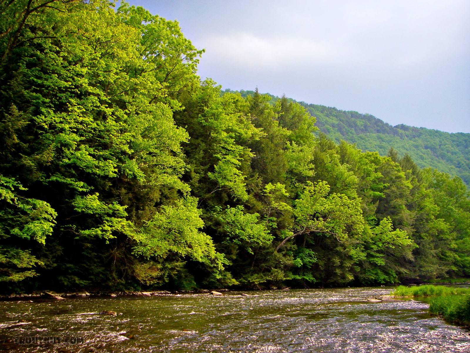 From Penn's Creek in Pennsylvania.