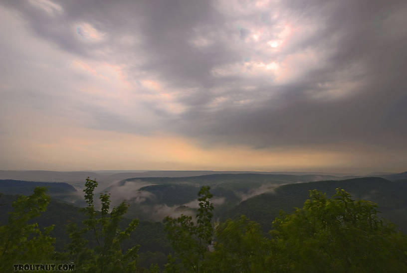 A trout stream valley covered in mist after a spring thunderstorm on a hot, humid day. From Penn's Creek in Pennsylvania.