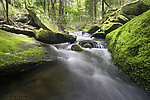From Wolf Brook (Neversink Gorge) in New York.